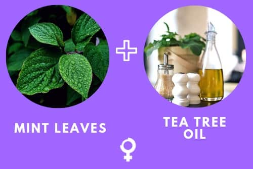Mint leaves and Tea Tree Oil Home Remedy for Dark Circles